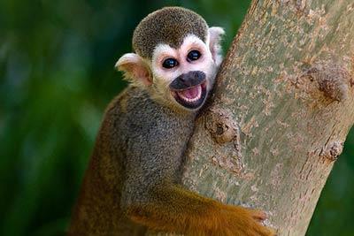 保持好心情,多看看这些可爱动物们的微笑!