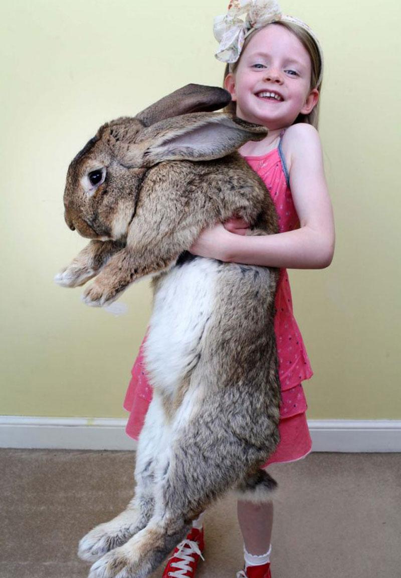 世界上最昂贵的大流士兔子,每年开消4千美元食物