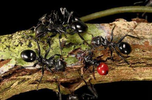 自然界动物们的伪装艺术,能骗得过你的眼睛吗?