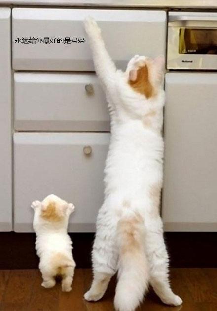 好玩的喵星人的生活:妈妈的爱!很萌,很感人!