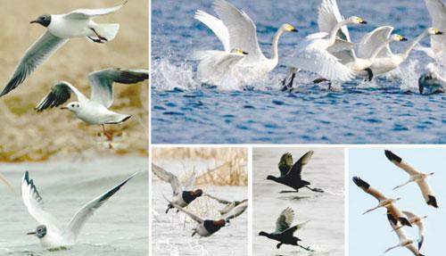 秋冬季节去哪里旅游比较合适?观鸟最当时