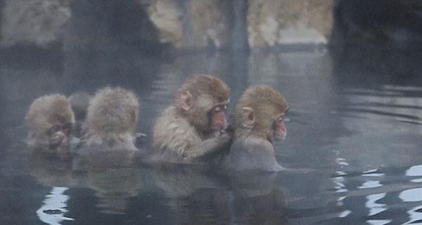 日本雪猴泡温泉销魂表情 萌翻游客