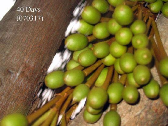 涨知识!榴莲的生长过程,喜欢的亲们看过来啦!