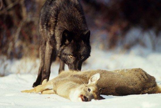 共生现象 盘点不同动物间的惊艳合作