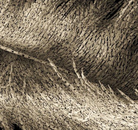 艺术家的千人裸体项目:漂浮的羽毛