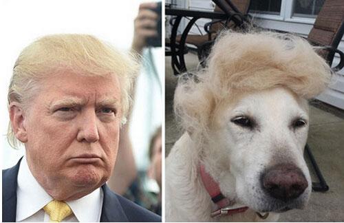 被玩坏的美总统竞选人唐纳德-特朗普 网友恶搞被吐槽的发型