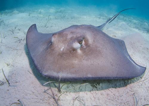 盘点海底世界最危险的10种动物