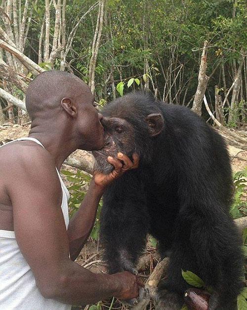 黑猩猩实验后遭丢弃 独自生活3年见人类仍拥抱