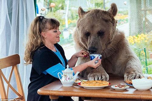 俄夫妇养270斤熊23年 每日同吃同住